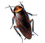 Cockroaches Control South Delhi